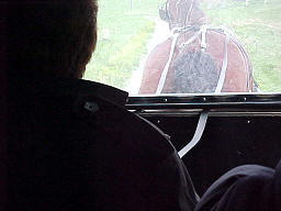 Annette Blair driving an Amish buggy